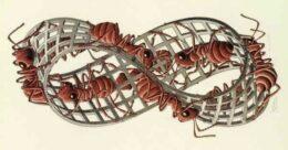 Hormigas de Moëbius, M. C. Escher